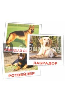 Купить Комплект карточек Породы собак (16, 5х19, 5 см), Вундеркинд с пелёнок, Обучающие игры