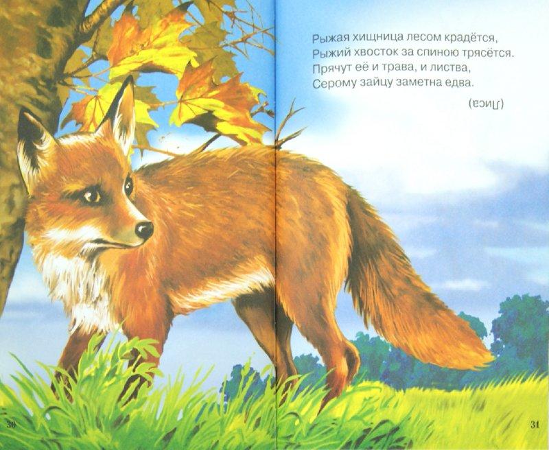 Иллюстрация 1 из 28 для Лесные загадки. Сборник загадок | Лабиринт - книги. Источник: Лабиринт