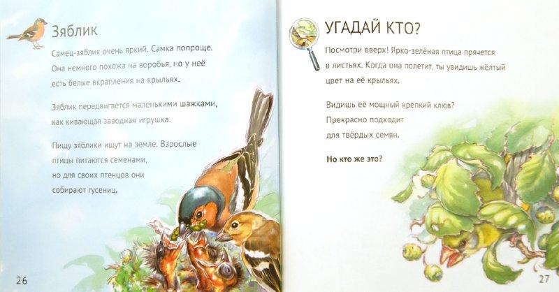 Иллюстрация 1 из 11 для Кто живет у нас на даче. Птицы - Анвин, Уиттли | Лабиринт - книги. Источник: Лабиринт