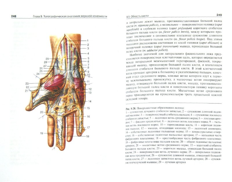 Иллюстрация 1 из 9 для Топографическая анатомия и оперативная хирургия: учебник. В 2-х томах. Том 1 - Анатолий Николаев | Лабиринт - книги. Источник: Лабиринт