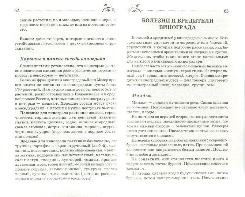 Иллюстрация 1 из 9 для Как вырастить виноград в Подмосковье и России - Татьяна Литвинова | Лабиринт - книги. Источник: Лабиринт