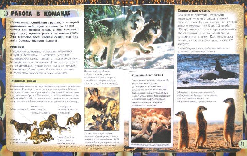 Иллюстрация 1 из 4 для Семьи животных - Анита Ганери | Лабиринт - книги. Источник: Лабиринт