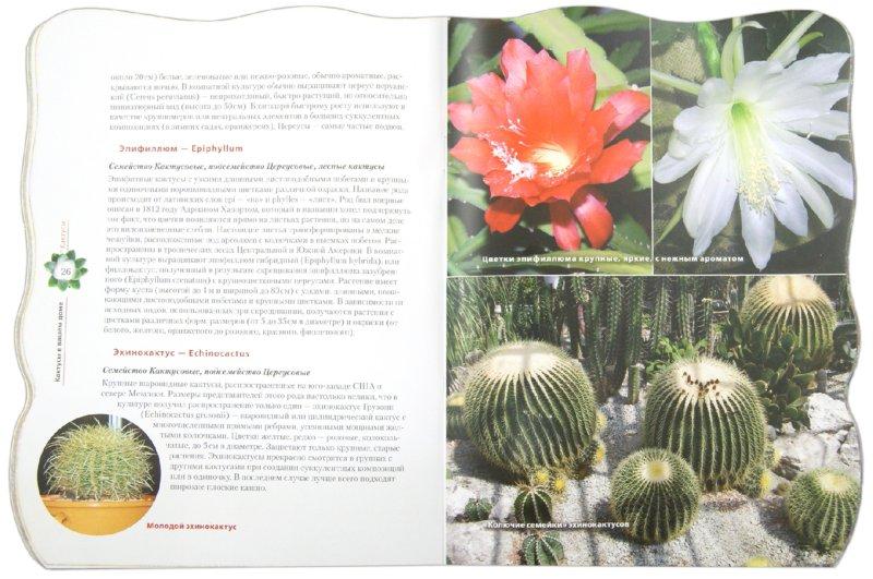 Иллюстрация 1 из 16 для Кактусы в вашем доме - Е. Волкова   Лабиринт - книги. Источник: Лабиринт