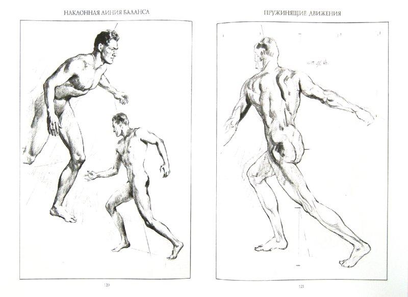 Иллюстрация 1 из 22 для Обнаженная натура. Руководство по рисованию - Эндрю Лумис | Лабиринт - книги. Источник: Лабиринт