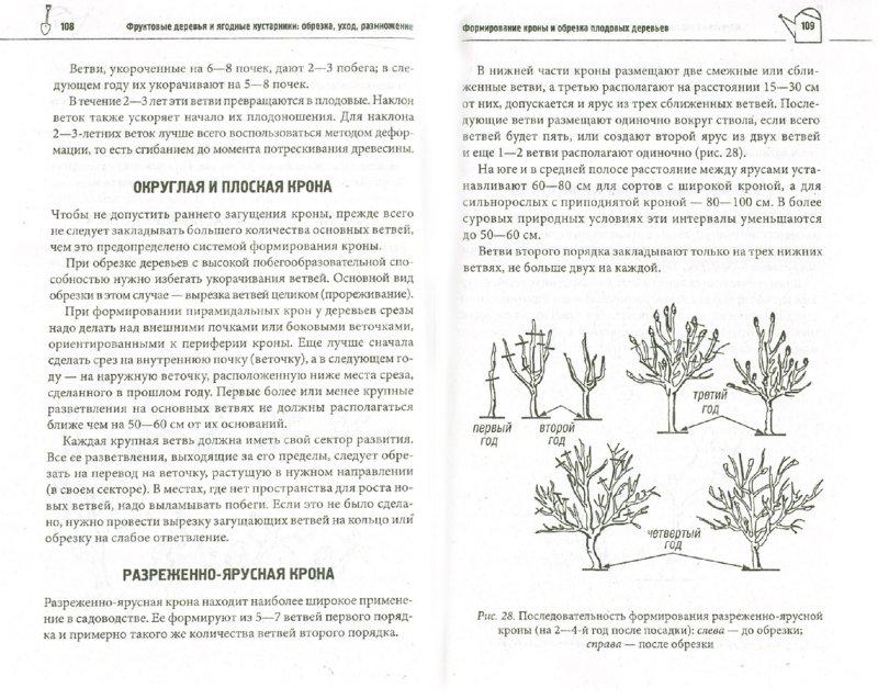 Иллюстрация 1 из 16 для Фруктовые деревья и ягодные кустарники: обрезка, уход, размножение | Лабиринт - книги. Источник: Лабиринт