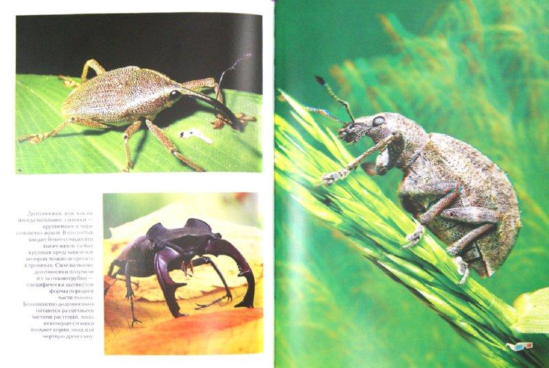 Иллюстрация 1 из 12 для Насекомые (+ очки 3D) | Лабиринт - книги. Источник: Лабиринт