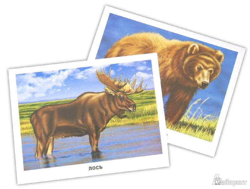 Иллюстрация 1 из 15 для Обучающие карточки. Дикие животные   Лабиринт - книги. Источник: Лабиринт
