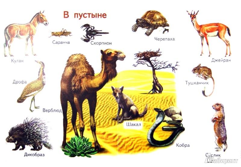 Иллюстрация 1 из 13 для Мой первый атлас животных   Лабиринт - книги. Источник: Лабиринт