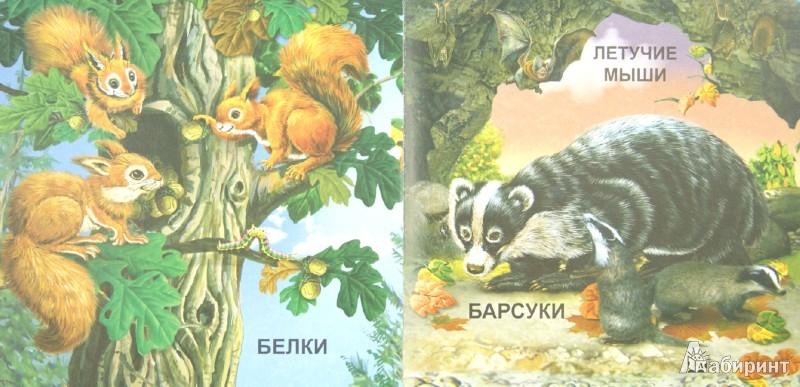 Иллюстрация 1 из 25 для Дикие животные | Лабиринт - книги. Источник: Лабиринт