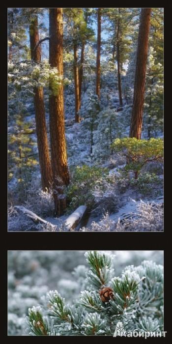 Иллюстрация 1 из 5 для Календарь 2013. All About Trees/Все о деревьях   Лабиринт - сувениры. Источник: Лабиринт