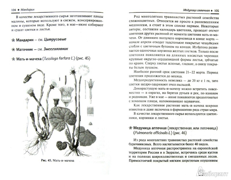 Иллюстрация 1 из 20 для Растения-медоносы - Николай Юраш | Лабиринт - книги. Источник: Лабиринт