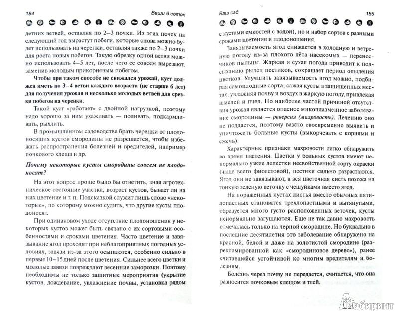 Иллюстрация 1 из 7 для Ваши 6 соток: хитрости и советы - Андрей Туманов | Лабиринт - книги. Источник: Лабиринт