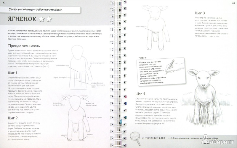 Иллюстрация 1 из 4 для Самые эффективные уроки рисования для тех, кто действительно хочет научиться рисовать - Кэйт Эшфорт | Лабиринт - книги. Источник: Лабиринт