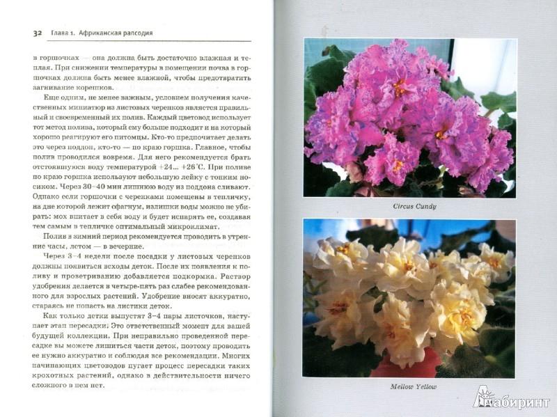 Иллюстрация 1 из 19 для Узамбарские фиалки. Выбираем, ухаживаем, наслаждаемся - Лариса Петровская | Лабиринт - книги. Источник: Лабиринт