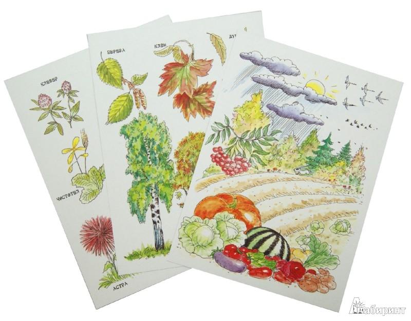Иллюстрация 1 из 26 для Осень. Беседы с ребенком. Комплект карточек - Вера Шипунова | Лабиринт - книги. Источник: Лабиринт