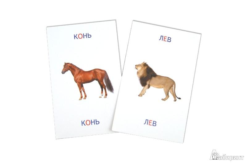 Иллюстрация 1 из 5 для Животные. Книга + карточки - Тамара Шапошникова   Лабиринт - книги. Источник: Лабиринт