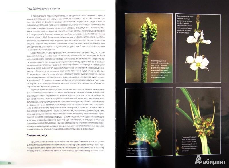 Иллюстрация 1 из 6 для Эхинодорус. Самое популярное аквариумное растение - Кристель Кассельман | Лабиринт - книги. Источник: Лабиринт