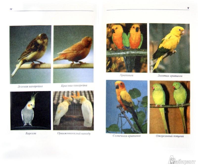 Иллюстрация 1 из 8 для Энциклопедия комнатных птиц - Александр Рахманов | Лабиринт - книги. Источник: Лабиринт