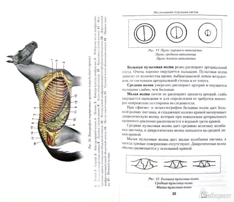 Иллюстрация 1 из 16 для Методологические основы к порядку клинического обследования больного животного - Коробов, Щербаков, Паршин | Лабиринт - книги. Источник: Лабиринт