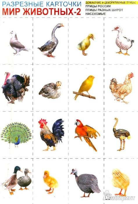 Иллюстрация 1 из 10 для Мир животных-2. Комплект разрезных карточек | Лабиринт - книги. Источник: Лабиринт