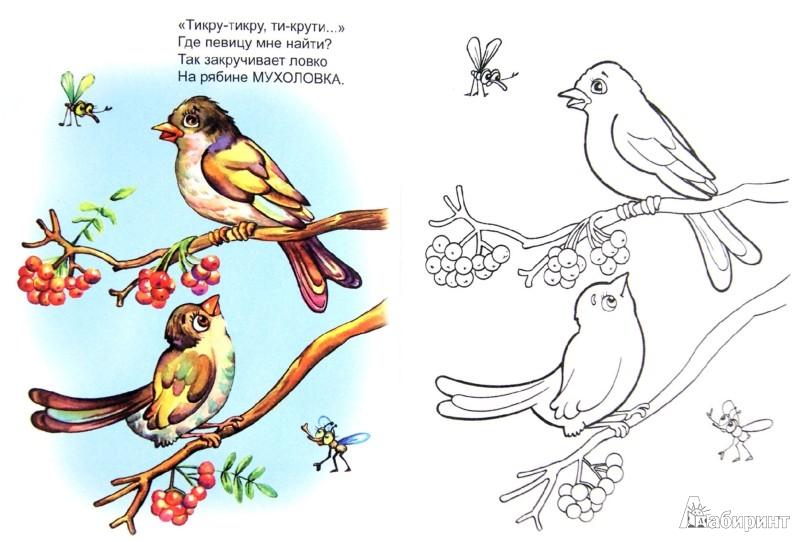 Иллюстрация 1 из 26 для Птичьи голоса - Юрий Чичев | Лабиринт - книги. Источник: Лабиринт