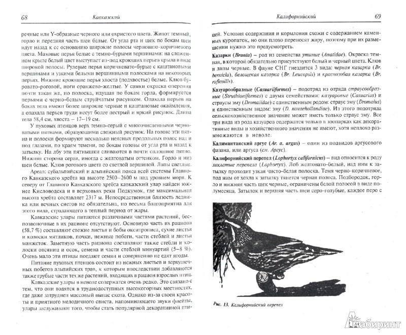 Иллюстрация 1 из 18 для Энциклопедия охотничьих и домашних птиц - Александр Рахманов | Лабиринт - книги. Источник: Лабиринт