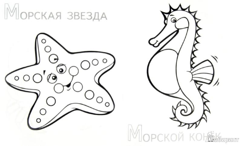Иллюстрация 1 из 14 для Забавные морские животные | Лабиринт - книги. Источник: Лабиринт