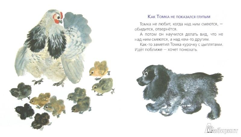 Иллюстрация 1 из 6 для Про Томку - Евгений Чарушин | Лабиринт - книги. Источник: Лабиринт