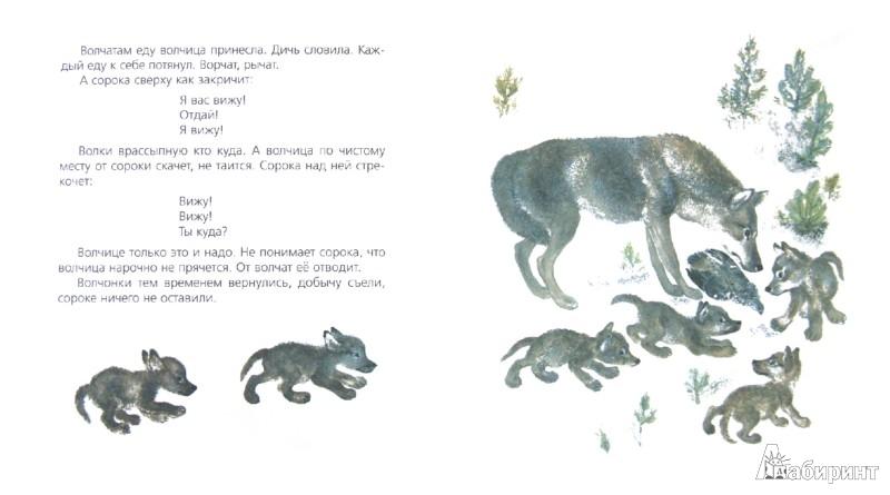 Иллюстрация 1 из 7 для Про сороку - Евгений Чарушин   Лабиринт - книги. Источник: Лабиринт