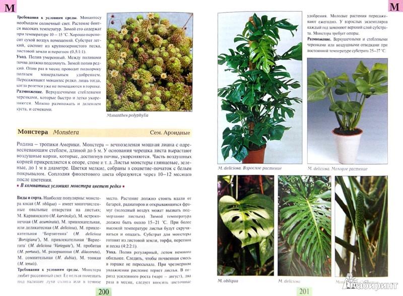 Иллюстрация 1 из 16 для Комнатные растения от А до Я - Валентин Воронцов | Лабиринт - книги. Источник: Лабиринт