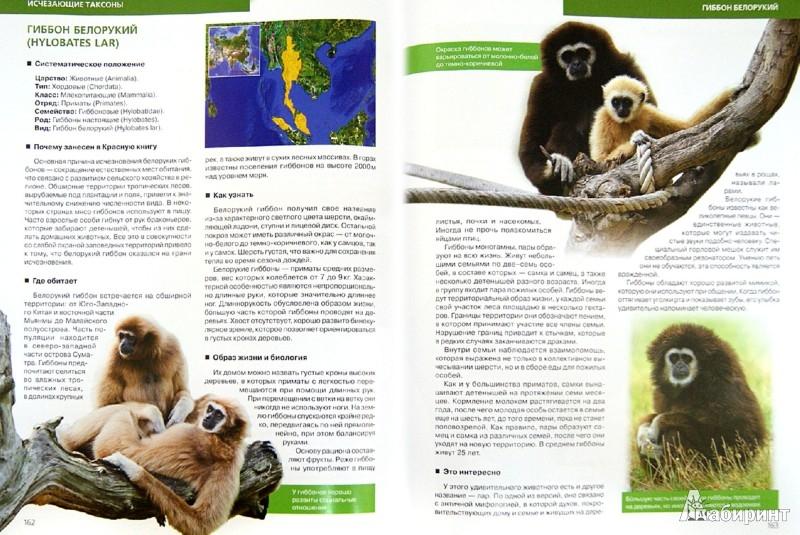 Иллюстрация 1 из 8 для Красная книга Земли - Скалдина, Слиж | Лабиринт - книги. Источник: Лабиринт