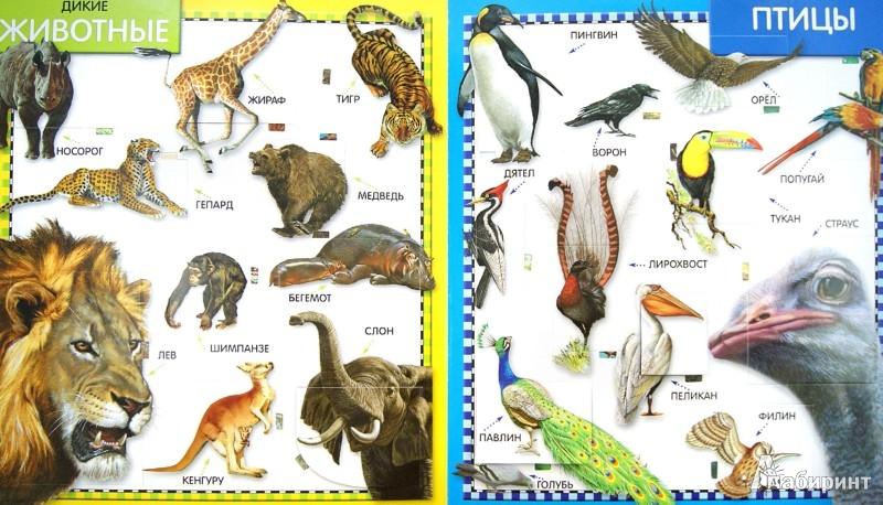 Иллюстрация 1 из 5 для 100 окошек. Животные | Лабиринт - книги. Источник: Лабиринт