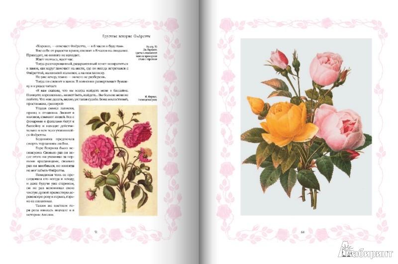 Иллюстрация 1 из 15 для Цветы в легендах и преданиях - Николай Золотницкий   Лабиринт - книги. Источник: Лабиринт