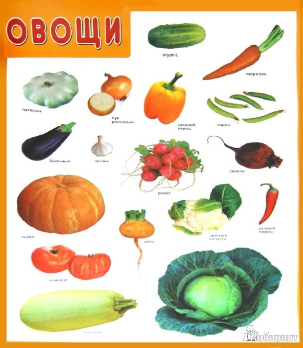 """Иллюстрация 1 из 2 для Плакат """"Овощи""""   Лабиринт - книги. Источник: Лабиринт"""