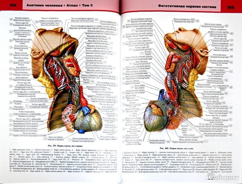 Иллюстрация 1 из 19 для Анатомия человека. Атлас. В 3-х томах. Том 3 - Билич, Крыжановский | Лабиринт - книги. Источник: Лабиринт