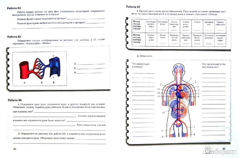 Иллюстрация 1 из 37 для Биология. 8 класс. Рабочая тетрадь. Комплект из 2-х частей - Маш, Драгомилов | Лабиринт - книги. Источник: Лабиринт