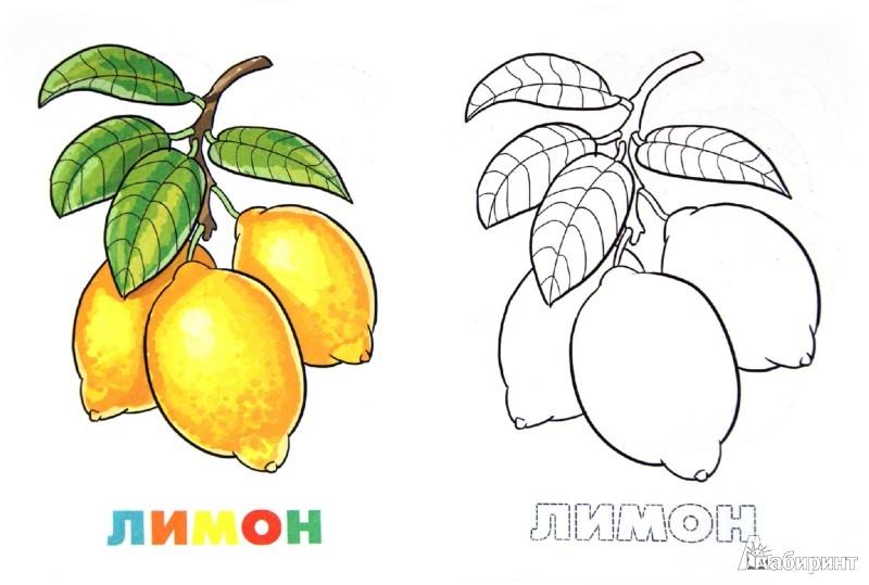 Иллюстрация 1 из 5 для Раскраска. Фрукты | Лабиринт - книги. Источник: Лабиринт