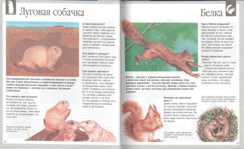 Иллюстрация 1 из 27 для Животные - Букобза, Мулинье | Лабиринт - книги. Источник: Лабиринт