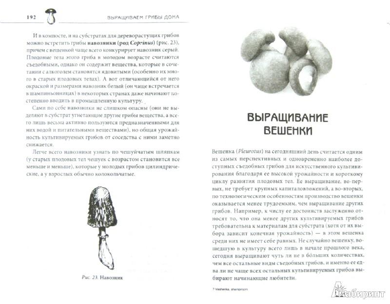 Иллюстрация 1 из 8 для Вешенка, шампиньоны, шиитаке, опята. Выращиваем грибы дома - Мария Цветкова-Верниченко | Лабиринт - книги. Источник: Лабиринт