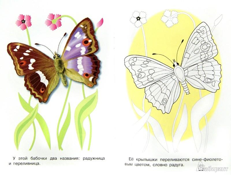 Иллюстрация 1 из 25 для Раскраска. Бабочки   Лабиринт - книги. Источник: Лабиринт