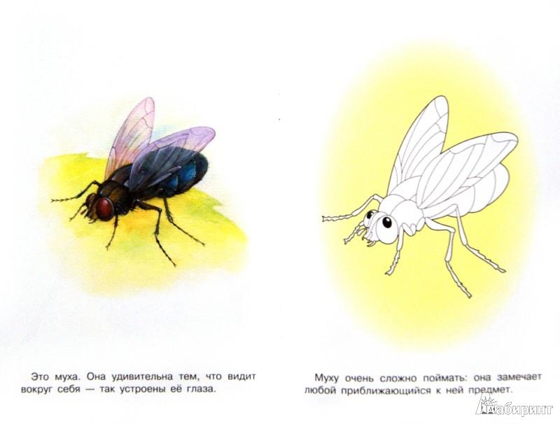 Иллюстрация 1 из 23 для Раскраска. Насекомые | Лабиринт - книги. Источник: Лабиринт