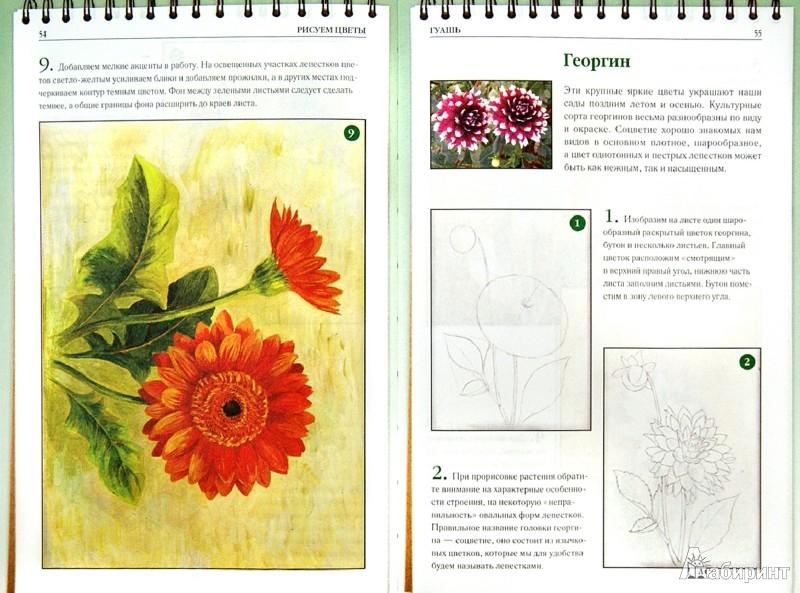 Иллюстрация 1 из 16 для Рисуем цветы - Наталья Котович | Лабиринт - книги. Источник: Лабиринт