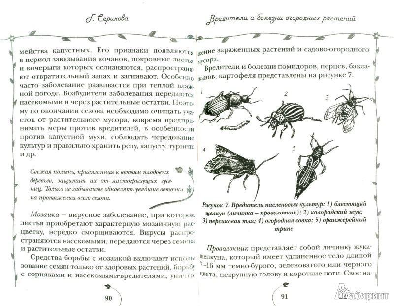 Иллюстрация 1 из 6 для Защита сада и огорода от вредителей и болезней - Галина Серикова | Лабиринт - книги. Источник: Лабиринт