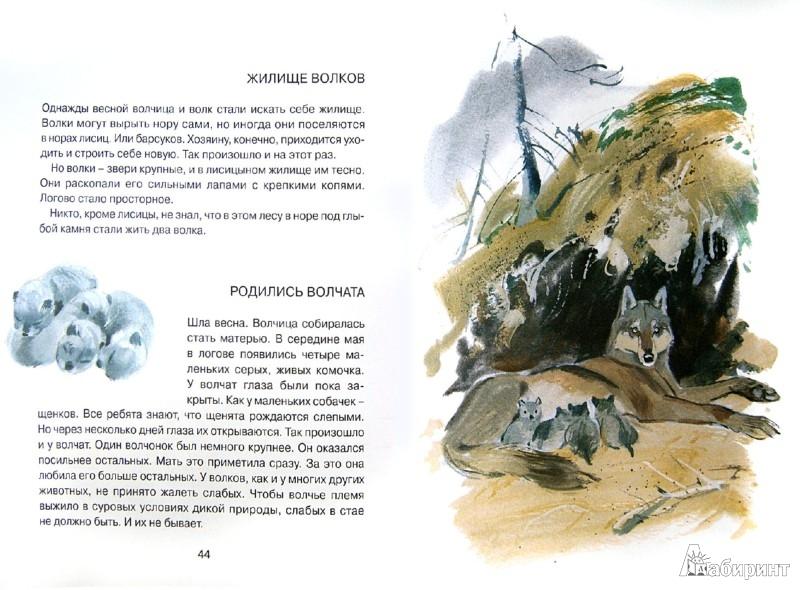Иллюстрация 1 из 45 для Заячье зеркало - Семен Устинов | Лабиринт - книги. Источник: Лабиринт