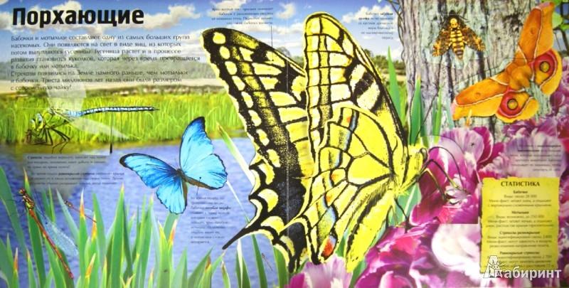 Иллюстрация 1 из 10 для Пугающие насекомые | Лабиринт - книги. Источник: Лабиринт
