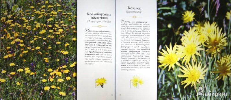 Иллюстрация 1 из 11 для Зеленый мир Кавказа - Владимир Романенко | Лабиринт - книги. Источник: Лабиринт