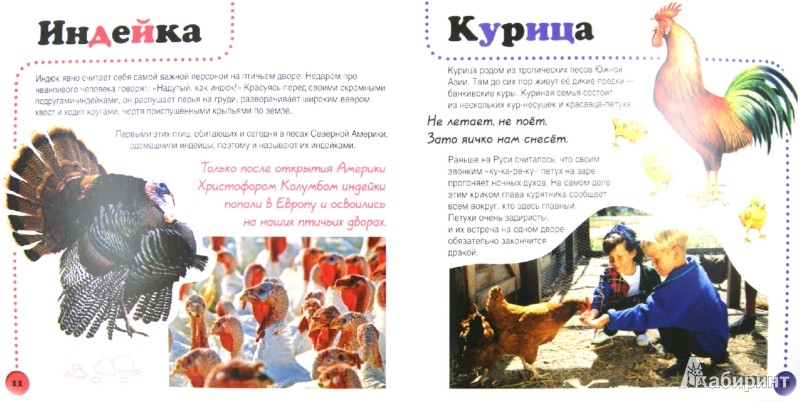 Иллюстрация 1 из 5 для Домашние животные - Ирина Травина | Лабиринт - книги. Источник: Лабиринт