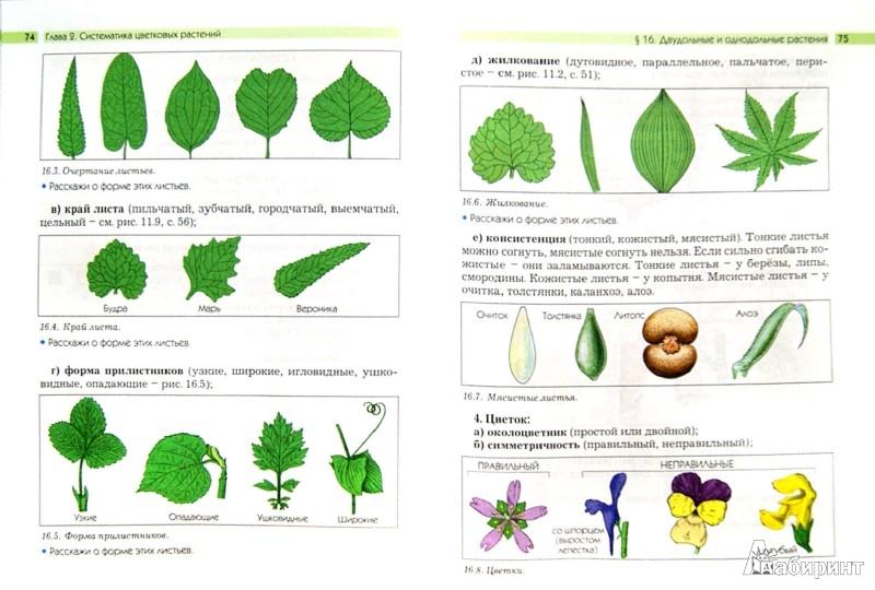 Иллюстрация 1 из 4 для Биология. Они растут, цветут и пахнут. 6 класс. Учебник. ФГОС - Ловягин, Вахрушев, Раутиан | Лабиринт - книги. Источник: Лабиринт