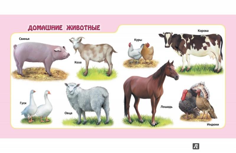 Иллюстрация 1 из 30 для Животные | Лабиринт - книги. Источник: Лабиринт
