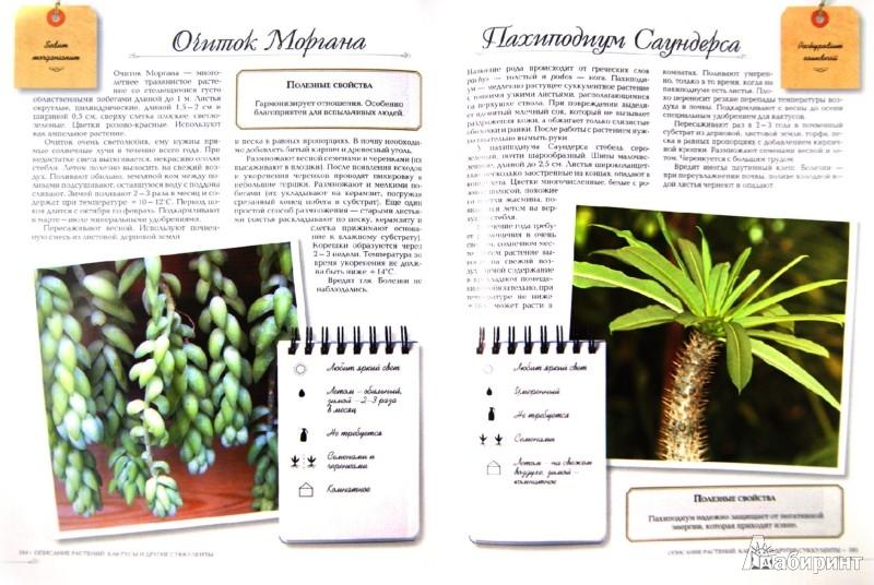 Иллюстрация 1 из 11 для Комнатные растения - Князева, Князева   Лабиринт - книги. Источник: Лабиринт